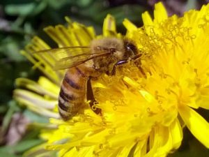 Latest Pesticides May Pose A Threat To Bees